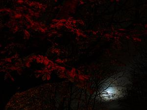 Maanlicht tussen de rode bladeren