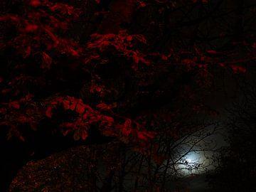 Maanlicht tussen de rode bladeren van Jan Kooreman