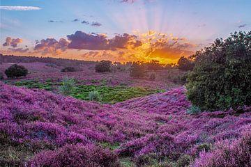 Sonnenuntergang Posbank von Patrick  van Dasler