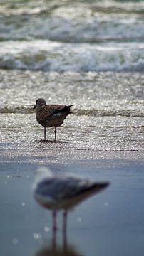 vogels aan zee van ticus media