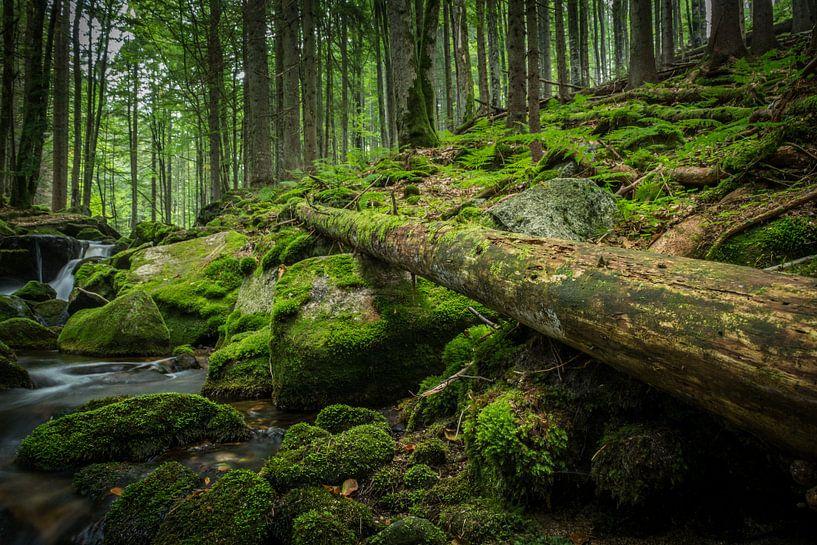 Oude boom in het Beierse Woud van Tobias Luxberg