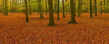 Herfstbos panorama van Sjoerd van der Wal