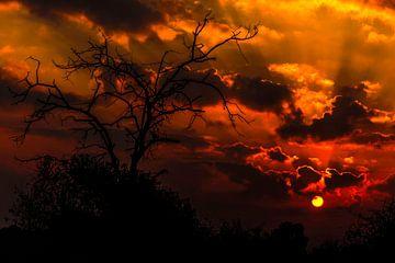 Zonsopkomst Zuid Afrika van Rob Smit