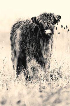 Schotse kalf (zwart-wit) van Bart van Mastrigt