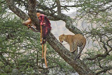 A Leopard's Kill van BL Photography
