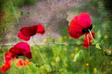 Rote Mohnblumen im Wind von Rietje Bulthuis