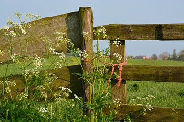 Farmer's fence sur Maurice Kruk