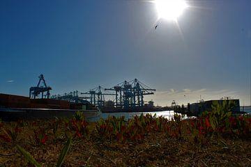 Rotterdamse Haven van Pieter Voogt