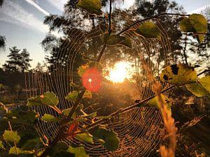 Spinnenweb in de ochtend
