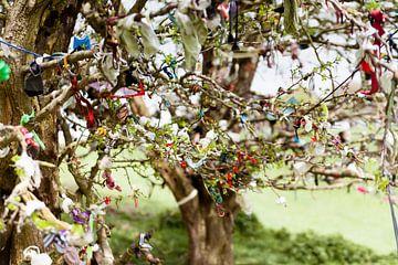 Fairy Trees