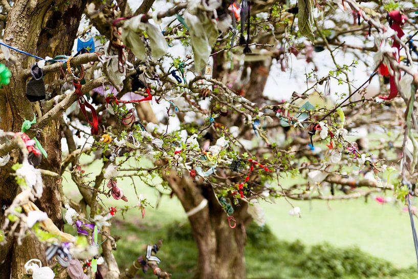 Fairy Trees van Irene Hoekstra
