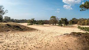 Panorama van de Korte Duinen