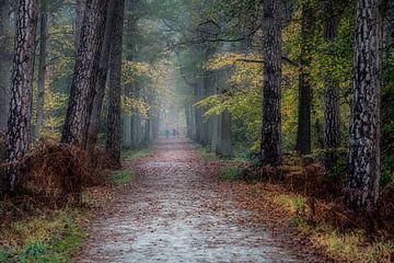 Herfst in het Peerdsbos