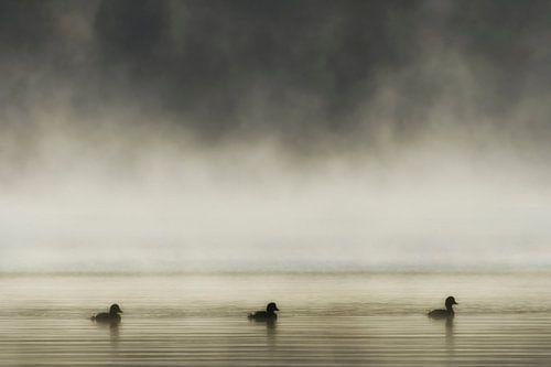 Trois canards