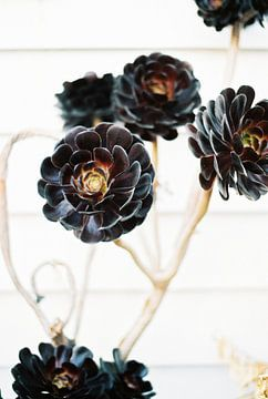 Imprimé floral botanique sur Raisa Zwart