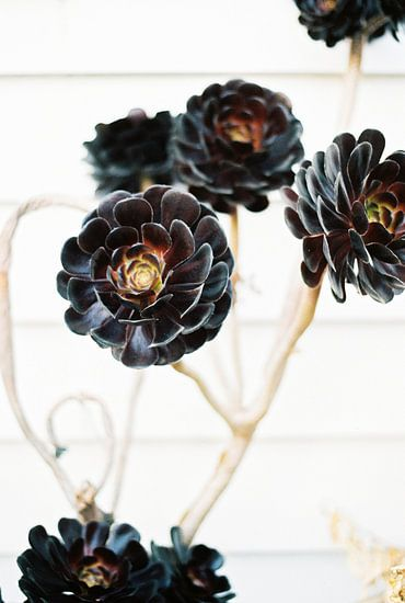 Floral botanische bloemenprint