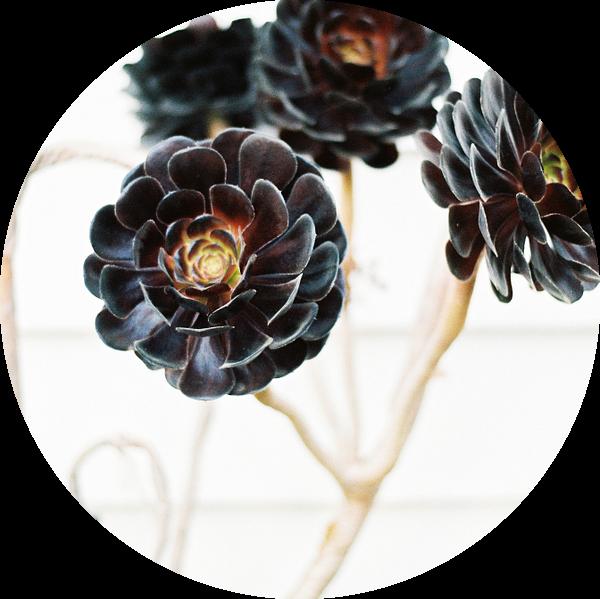 Floral botanische bloemenprint van Raisa Zwart