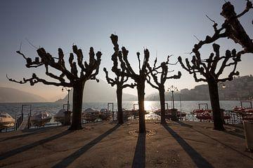 Bomen aan het Meer van Lugano bij zonsondergang van Joost Adriaanse