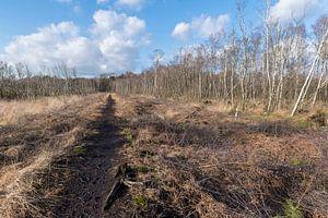 Natuurreservaat het Wooldse veen in Winterswijk
