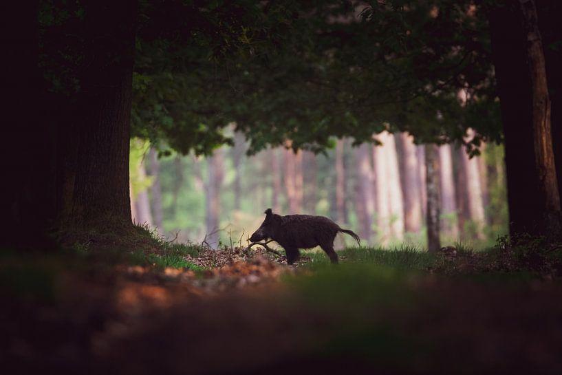 Wild zwijn van Pim Leijen