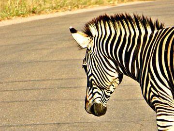 zebra van zam art