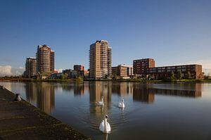 Zoetermeer Oosterheem Skyline en Zwanen