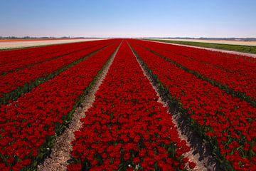 Tulpenveld van FotovanHenk