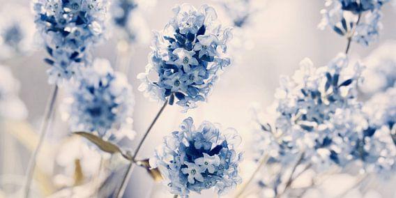 Lavendel van Violetta Honkisz