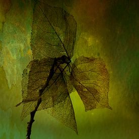 Stilleven van bladeren van Ellen Driesse