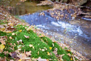 Fris stromend water in beekje met herfstbladeren van Fotografiecor .nl