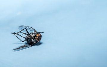 Nahaufnahme einer toten Fliege die auf dem Rücken liegt von Hans-Jürgen Janda