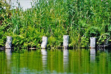 Houten palen uit water van David van Coowijk