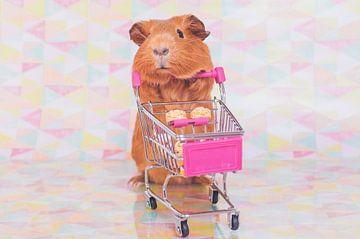 Go shopping! van JBfotografie - jacindabakker.nl