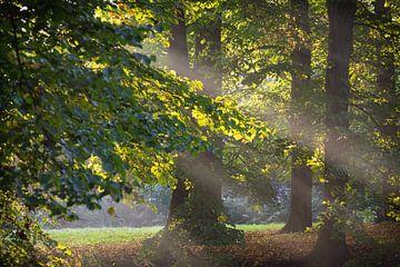 De ochtendzon schijnt door de bomen van Michel Geluk