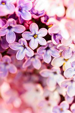 Flower Bokeh van Geert Huberts