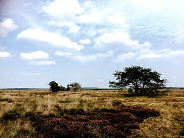 Heideveld in de zomer van Remy de Wild