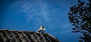 Love birds van BSO Fotografie