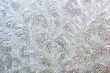 Eisblumen auf Glas im Winter 7008020012 Fotograf Fred Roest, von Fred Roest