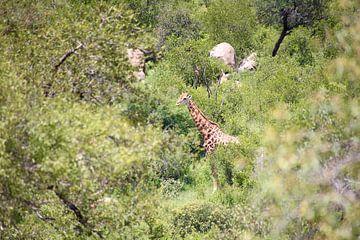 Giraffe in the bush van Suzy den Engelse