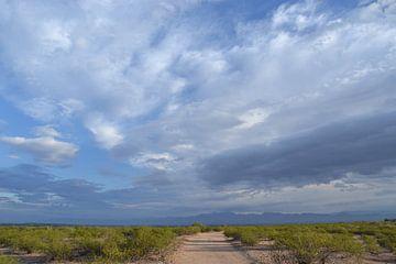 Arizona, in de woestijn van Bernard van Zwol