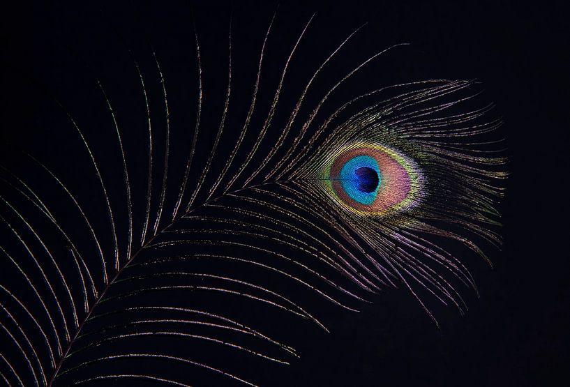 L'œil du paon sur Franke de Jong