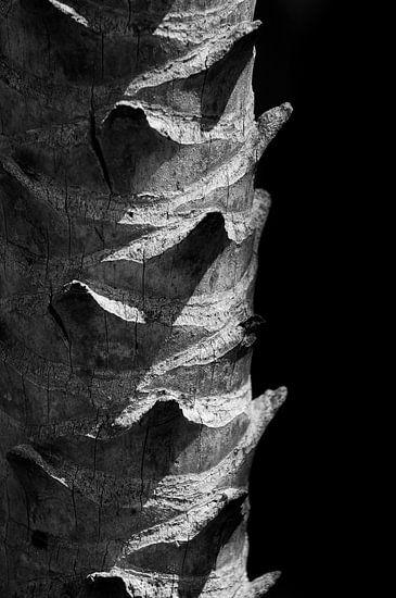 Stam van een palmboom in zwart-wit