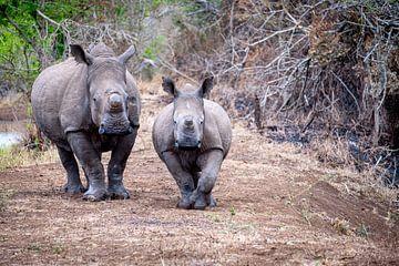 Mother and child - Rhino van Ineke Huizing