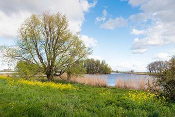 Lente in de natuur van Ruud Morijn