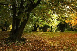 Kleurenpracht in de herfst