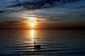Zwanenmeer van Geertjan Kuper