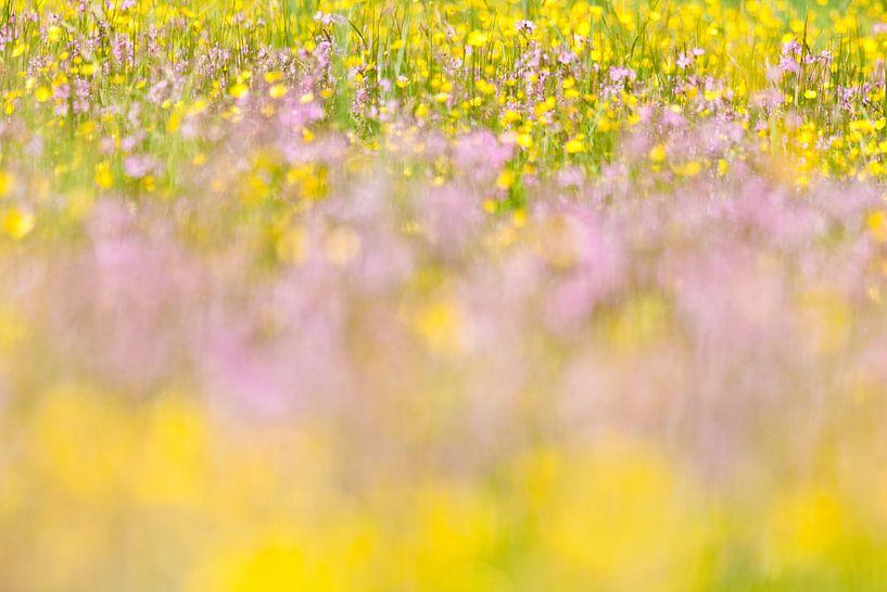 Zee van paarse en gele bloeiende bloemen in heemtuin  van Caroline Piek