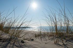 Am Strand von Jaco Verheul