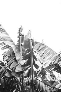 Zwart Wit Bananenplant van Patrycja Polechonska