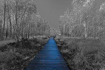 Steg in einem Birkenwald von Gottfried Carls